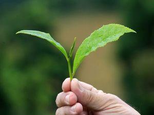 SUPERGROUP: Natural resource management groups merge