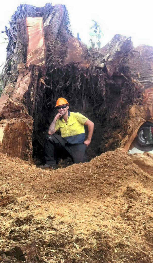 Fuller Brendan inside the felled fig tree.