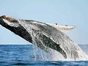 Whales turn on the fun