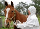 Don't horse around with PICs at this year's Maclean Show