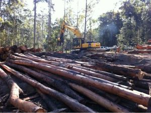 Forestry bill sets scene for new era for the industry