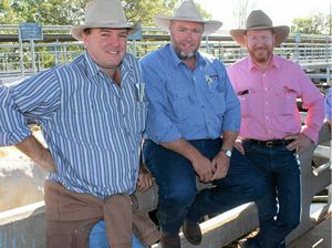 Prices firm at Gracemere sale