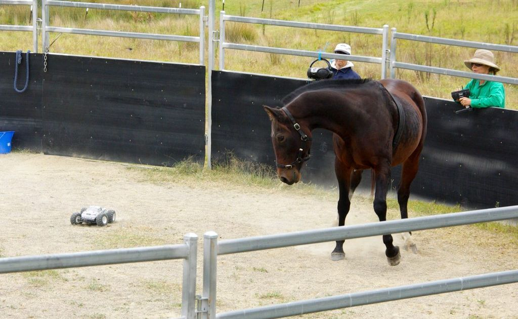 University researchers have cast doubt on the humanity invovled in the Monty Roberts method of horse training