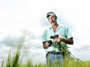 Dry change a relief to crops