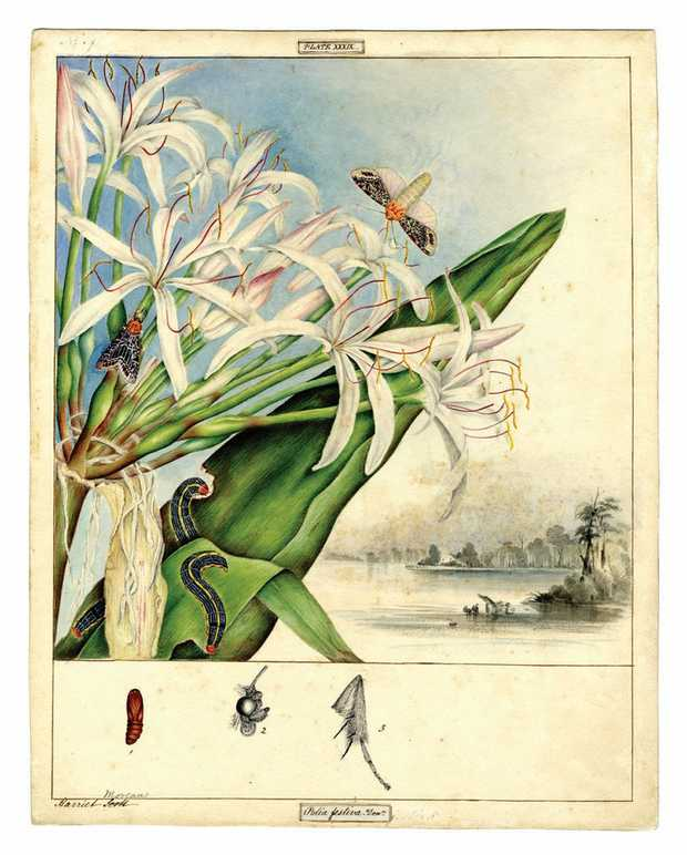 One of the illustrations on display from Beauty and Nature: Art of the Scott sisters.