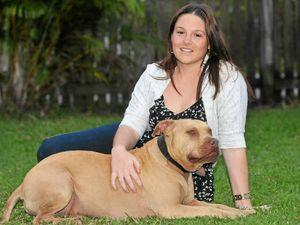 Debate over pitbull puppy