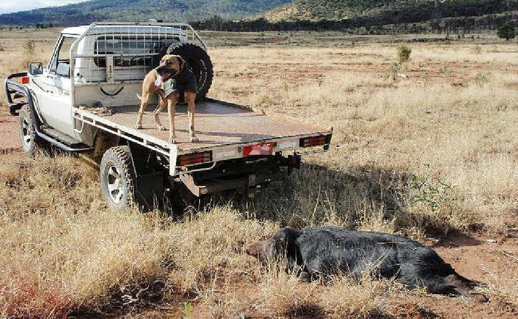 Pig hunters have hit back at RSPCA claims about the use of dogs on the job.
