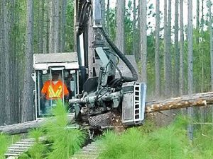 Imports a threat to timber industry