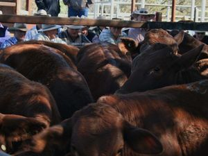 Council extends saleyards lease