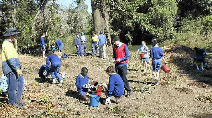FUTURE FOREST: Trinity Catholic College students planting trees on the Wilson riverbank.