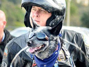 Fastest dog on two wheels