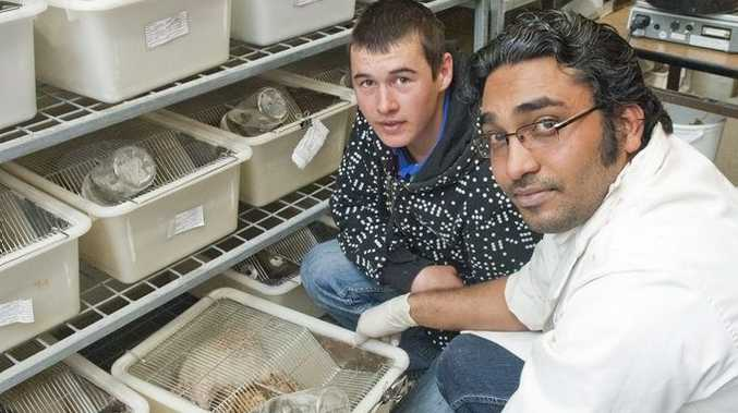 Quilpie State College Year 10 student Tyson Smith gets a close look at some rats in the science labs with Dr Sunil Panchal from USQ.