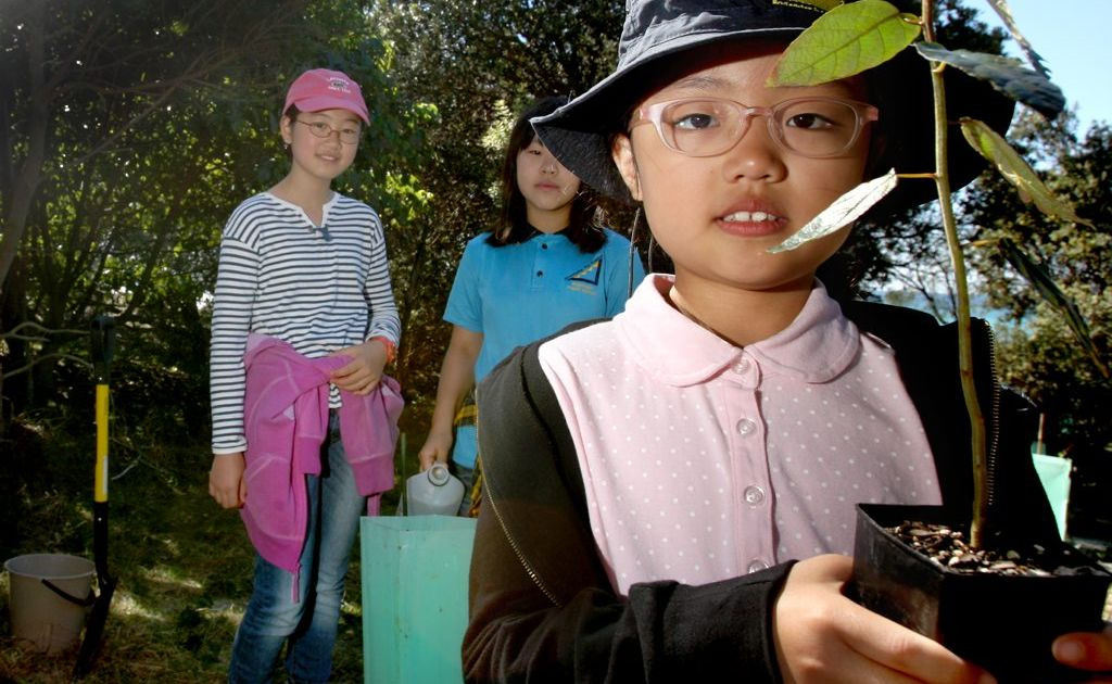 Student Madeline Choi, 8, about to plant a tree with fellow students Chloe Shin, 9, and Kelly Kim, 12, at Cabarita.