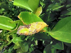 Wet July raises risk of disease