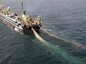 Ban to sink super-trawler