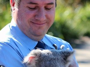 Powell protects future of koalas