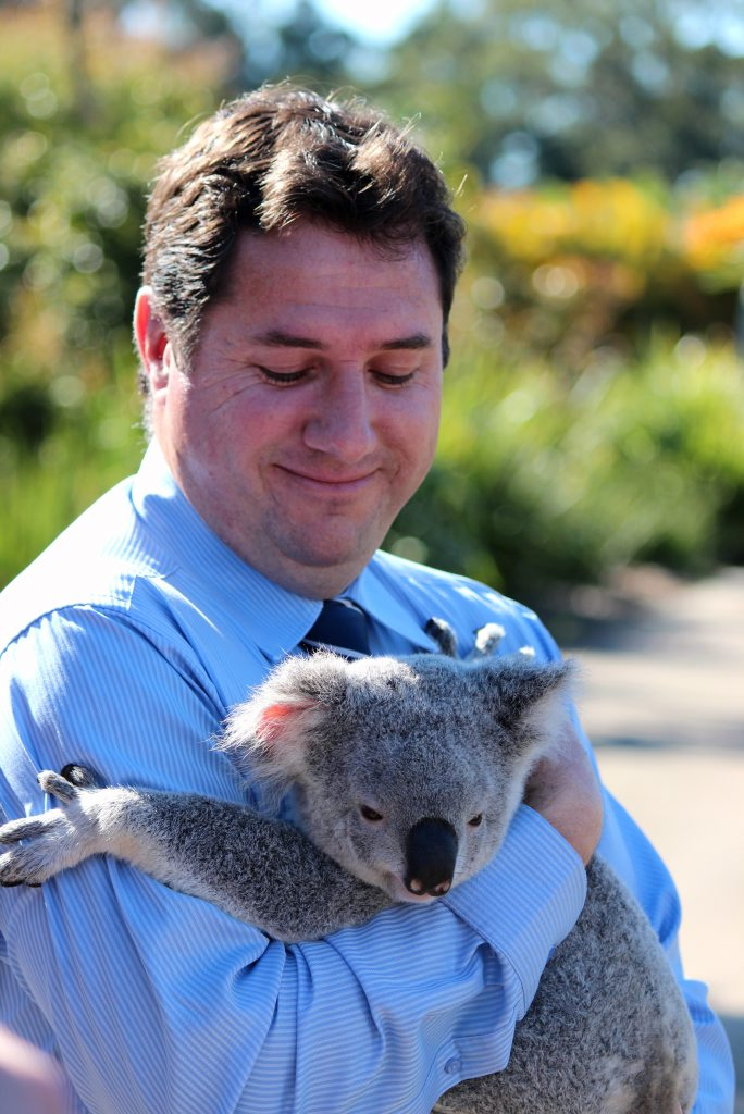 Minister for Environment and Heritage Protection Andrew Powell with India the Koala at Australia Zoo Wildlife Hospital.