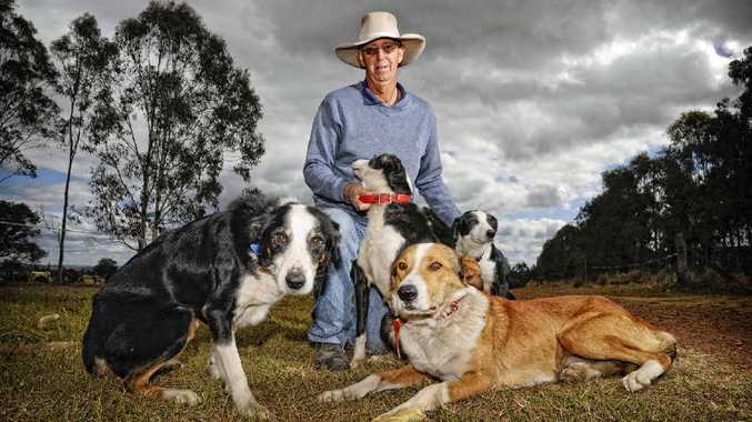 SOMETHING IS WORKING: The Clarence is fast becoming a breeding ground for great working dogs, says Grafton dog trainer Lew Malloy.