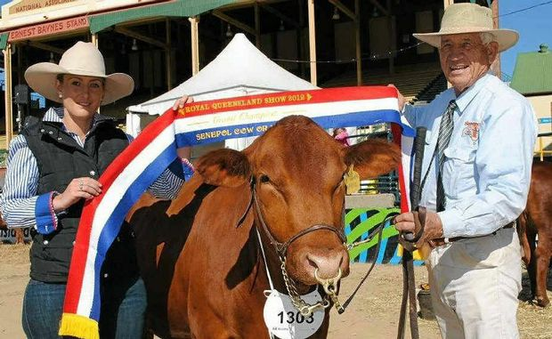 CHAMPION: Local cattleman John Brandon (right) and Jade Tighe with Boomerang Park April, who won grand champion senepol female for her fourth consecutive Ekka.