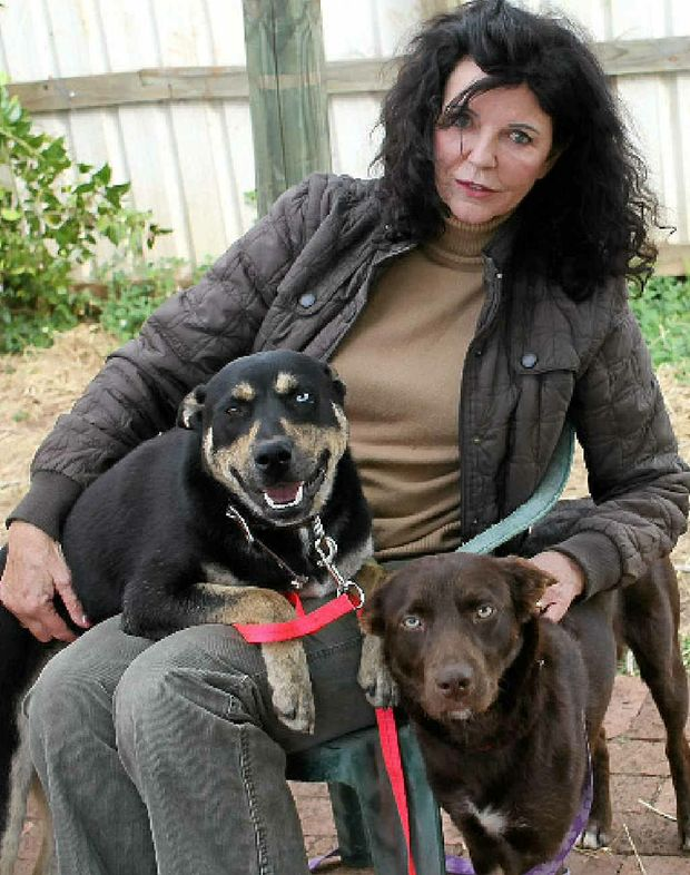 Barbara Steffensen with Taffy and Matilda at the Animal Rights and Rescue Group's Lismore shelter.