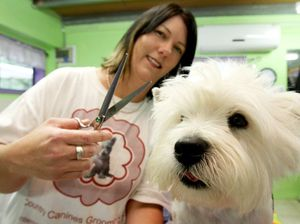 Vanessa wins first dog grooming comp