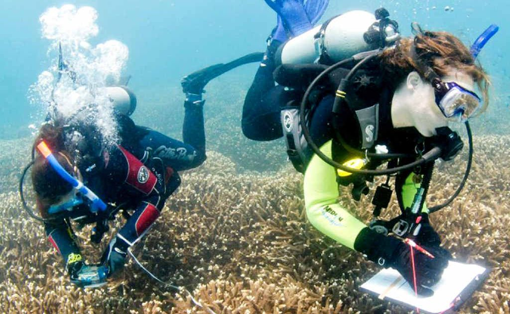 Reef Check survey divers record data for a long-term monitoring project. The not-for-profit organisation has spent the past two days installing monitoring stations in reefs around Hervey Bay.