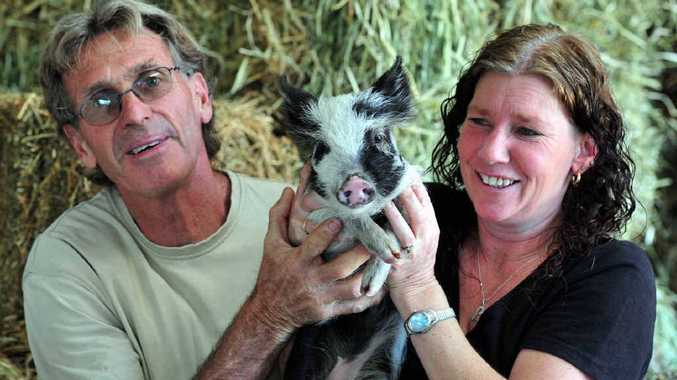 Greg Craddock and Brenda Murray with Arnold, their pet pig, at Noosa Produce.