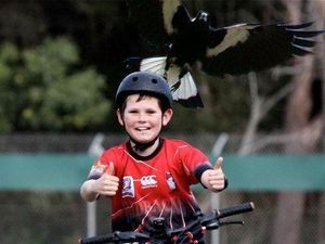 Vet gives tips to tolerate swooping magpies