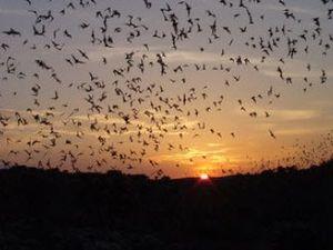 Bat-spotting at Carlsbad Caverns