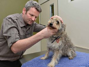 Tick all boxes to keep pet safe
