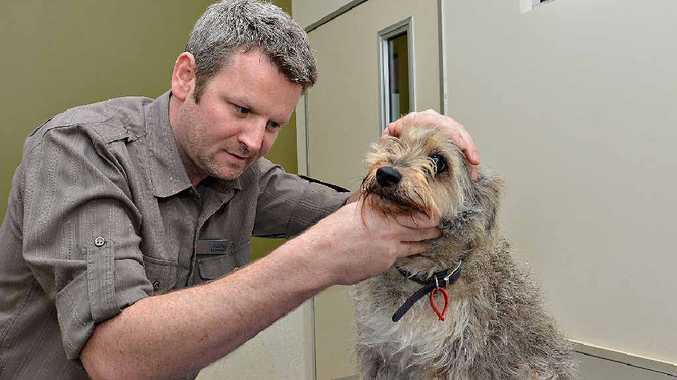 Vets are warning pet owners to check their pets regularly as it's shaping shaping up to be a bad season for ticks.