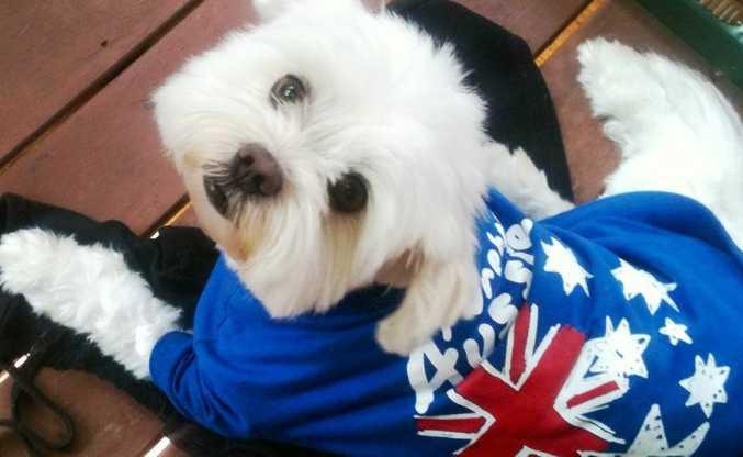 Most Loving Pet Star winner - Dalhi
