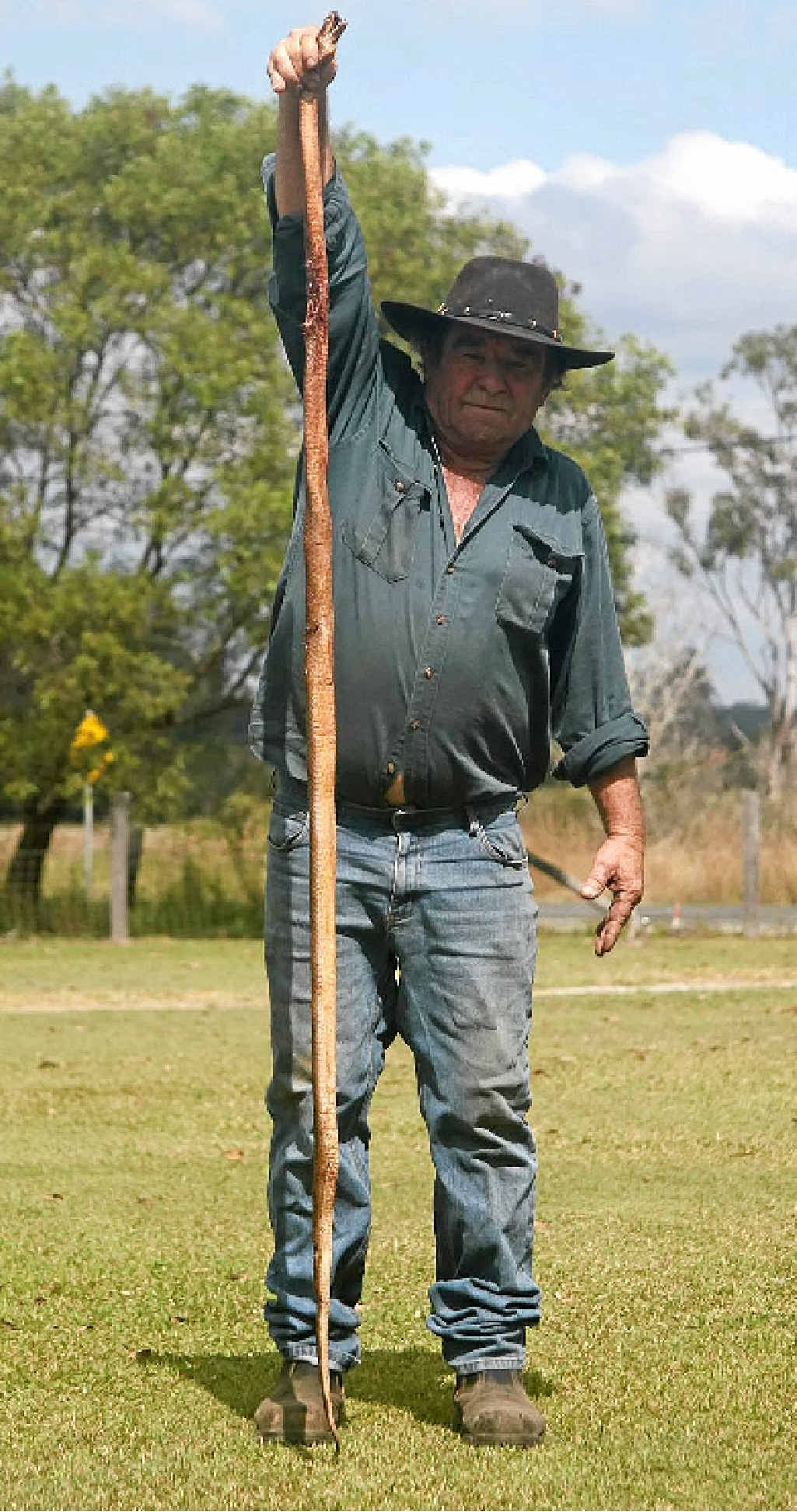 Brian Lazell holds aloft a 2.2m taipan found dead after being struck by a car on the Bauple-Woolooga Rd.