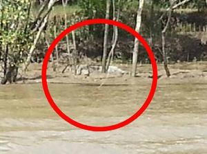 Monster croc slide sighted in the Fitzroy freshwater