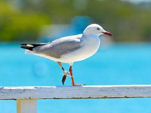 Brunswick firefighter receives PETA award for saving gull
