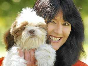 Take pups to shelter, not market