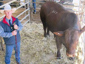 Big bull sale, even bigger prices