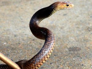 Deadly snake, drugs discovered during raid