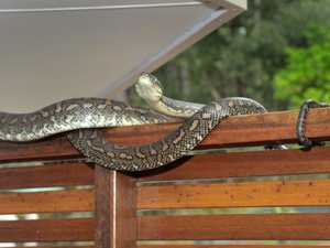 Tweed's most spotted snakes