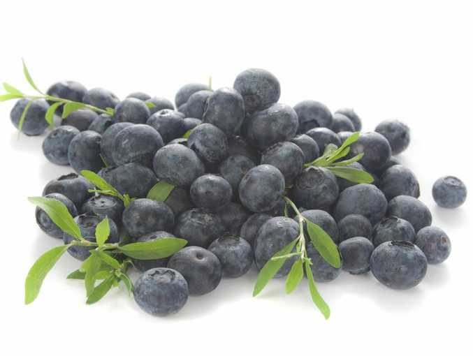 Fresh blueberries are great for pancakes, cakes, smoothies and even some savory treats.