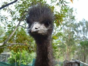 Thieves snatch emu from wildlife park