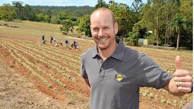 Manager Brendan Weatherill is happy pineapple plantings are underway at the Big Pineapple.
