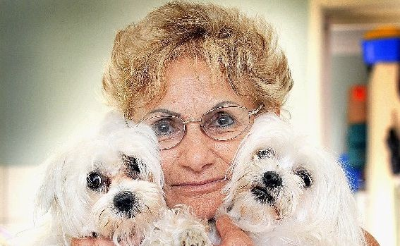River Heads resident Bev Bourke with her maltese terriers Roxy and Sky.
