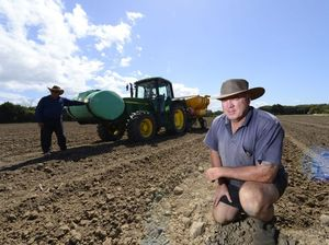 Sugar growers show confidence with record plantings