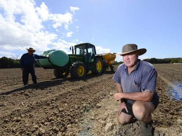 Ross Farlow (front) and Bruce Ellem planting cane on Alan Cameron's farm.