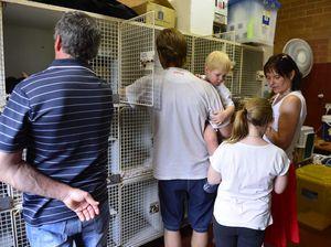 Cat adoption day