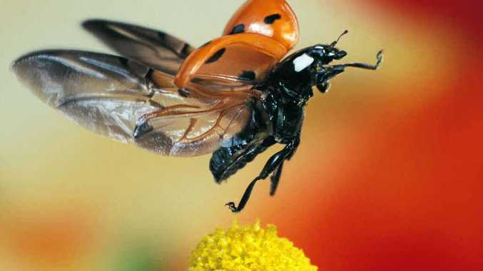 There's more to ladybirds than you may think.