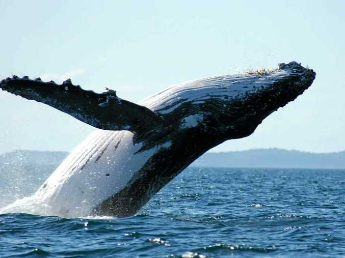 this is the best month to hear the singing of the whales.