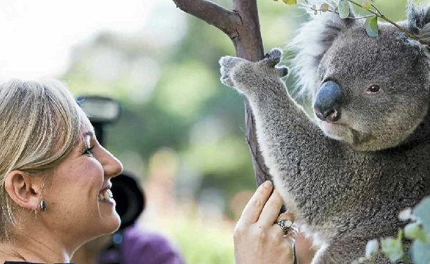 Greens Senator Larissa Waters at a press conference with a koala called Winston.