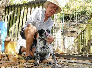 Lucky dog's survival